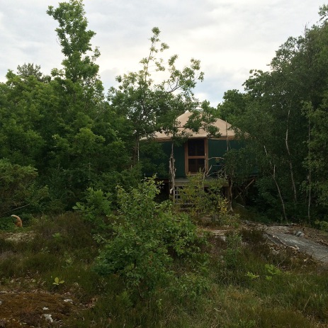 Yurt in the forrest