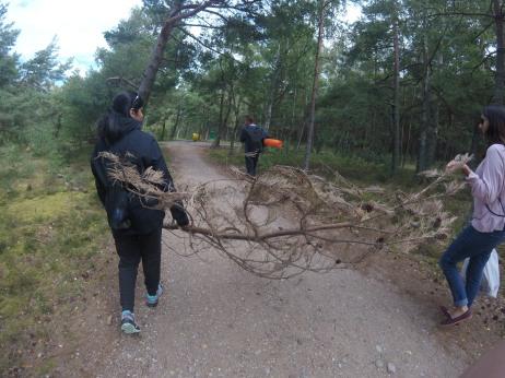 Wood haunting